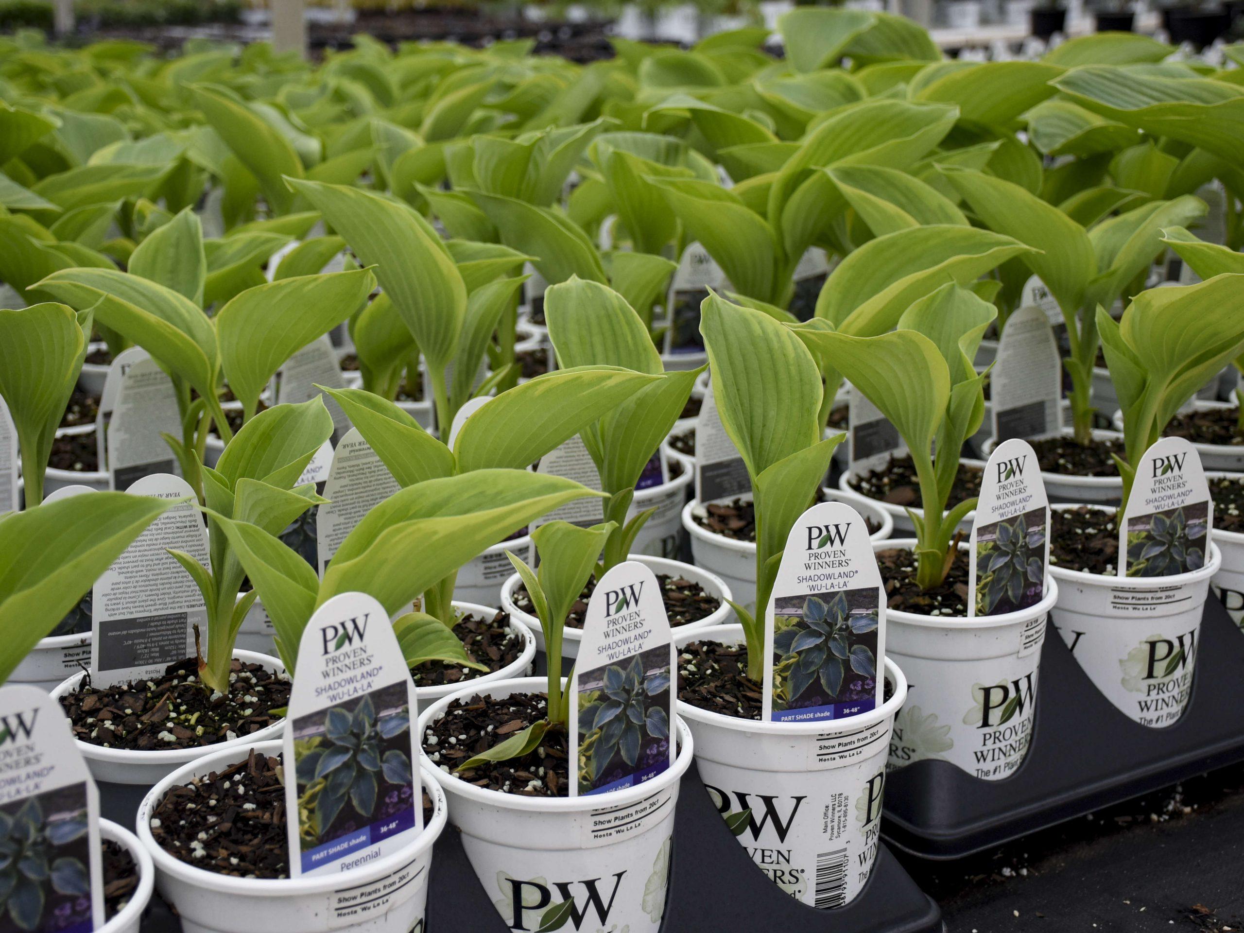ters Gardens' Proven Winners plants
